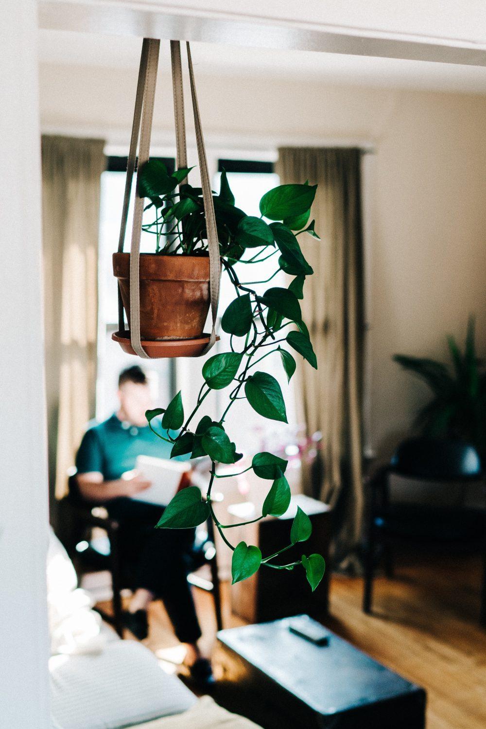 money plant indoor plants singapore